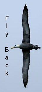 albatross_back01