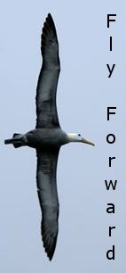 albatross_right01
